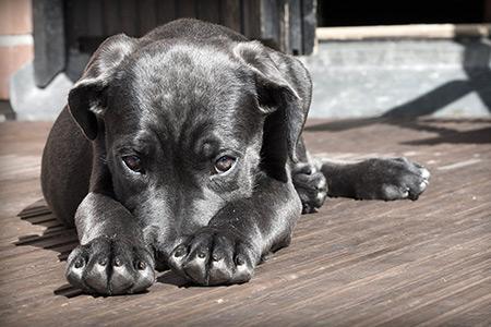 Cedere un cane di proprietà al canile