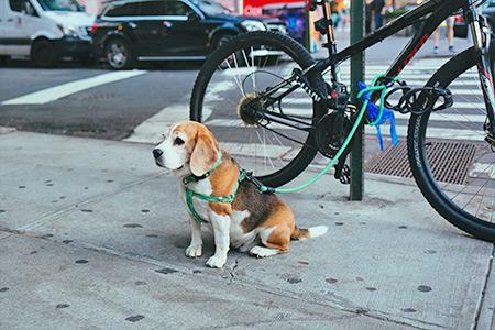 Limitare accesso ai cani in negozi e uffici