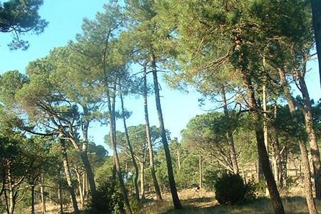 Parco di Galceti