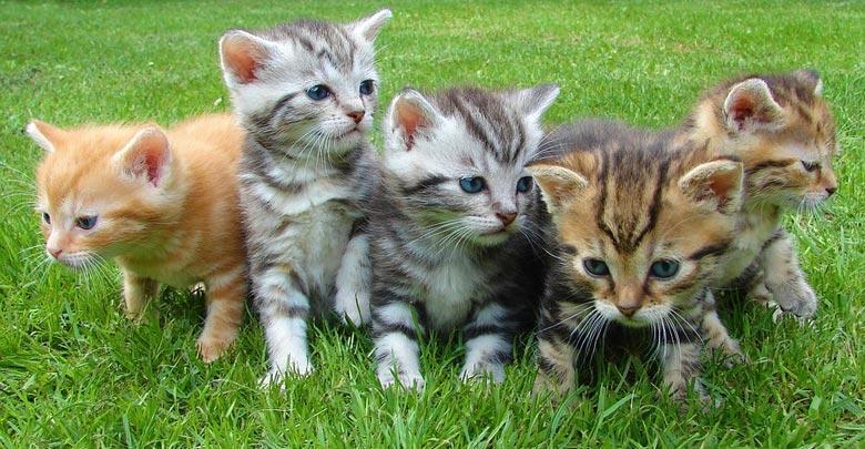 Censimento sterilizzazione colonia felina