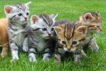 Censimento colonie feline