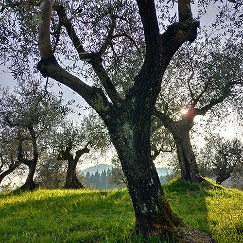 Orti e oliveti sociali