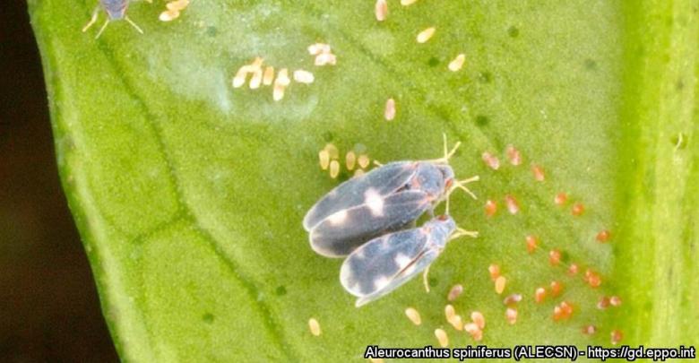 Foto dell'insetto sulle piante